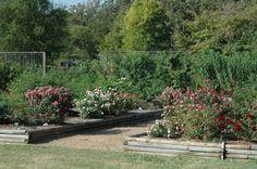 texas landscaping | Earth-Kind landscapes