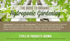 Guide To Hydroponic Gardening #infographic