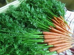 Carrot greens are full of nutrition! 6 times as much vitamin C as the carrot root, and they also have calcium, potassium, and other nutrients. Here's an easy. Carrot Greens, Carrot Top, Vitamins And Minerals, Plant Based Recipes, Asparagus, Natural Remedies, Make It Simple, Carrots, Meals