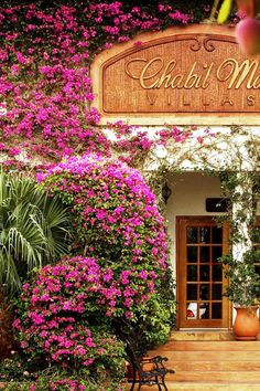 A flight from Belize City, Chabil Mar offers an island getaway with a difference. Belize Hotels, Belize City, Weather In Belize, Vacation Places, Trip Advisor, Spa, Island, Holiday, Cities