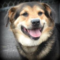 Trumbull County Dog Kennel, Warren, OH 330-675-2787 Flash is an adoptable Shepherd Dog in Warren, OH. Flash is a super handsome boy, about 1 year old and weighing 49 lbs.  Available for rescue/adoption 6.4.13.   ***Must be 18 years of age or older to a...