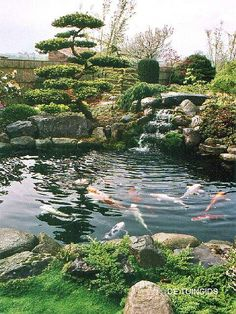 De Tuingids - Een Japanse tuin