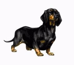 This is an appreciation blog for the wonderful short-legged, long-bodied breed, Dachshunds. ♥ My...