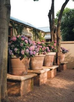 Hydrangea plants in large terracotta pots Hydrangea Potted, Hortensia Hydrangea, Boxwood Garden, Garden Pots, Potted Garden, Garden Steps, Potted Plants, Beautiful Gardens, Beautiful Flowers