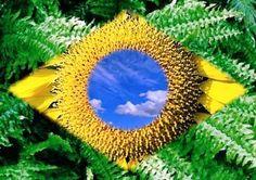 bandeira do brasil significados das cores - Pesquisa Google