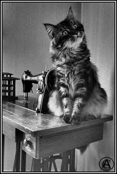Cats love sewing machines. It's a fact.