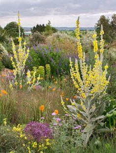Little Garden Design Cottage Garden Plants, Dry Garden, Garden Beds, Amazing Gardens, Beautiful Gardens, Garden Wallpaper, Seaside Garden, Drought Tolerant Garden, Herbaceous Border