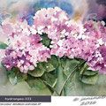 hydrangea-III / Watercolour 30x40cm on Arches CP © janinaB. 2016
