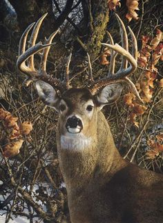 An Autumn Gentleman - Carl Brenders Wildlife Art Whitetail Deer Pictures, Deer Photos, Deer Pics, Wildlife Paintings, Wildlife Art, Deer Paintings, Animals Beautiful, Cute Animals, Big Deer