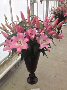 Roze lelies/ Pink Lilies