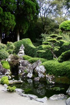 A tree peeks out from behind a bush at a higher elevation Les jardins de Chiran - Japon
