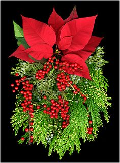 Gorgeous!! looove red pointsettias!! and tons of evergreens and berries!!!!! Sooooo Merrry Christmas!!! 12/25/12