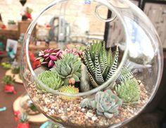 HappyModern.RU   Мини-сад за стеклом: делаем флорариум своими руками…