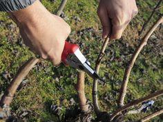 Prepare Your Garden for Spring: 3 Tips --> http://www.hgtv.com/gardening/3-gardening-chores-to-prepare-for-spring/index.html?soc=pinterest
