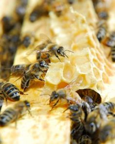Post about beekeeping experience