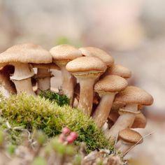 "Woodland Nature Photography Print ""Mushroom No. 7"""