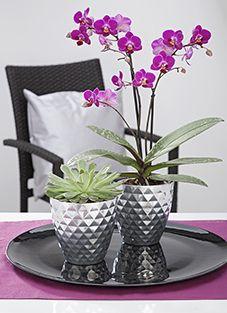 Design#5001323: . Orchideen Pflege Tipps Fur Die Wunderschonen Zimmerpflanzen