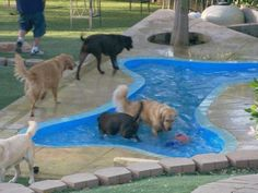 Rooms Viewer In ground bone shaped pool; I wouldn't be able to keep Sam out of this….if someone was there to throw the ball she would be in heaven. Bone Shaped Dog Pool, Pet Boarding, Pet Resort, Dog Rooms, Dog Daycare, Baby Dogs, Doggies, Dog Park, Dogs Of The World