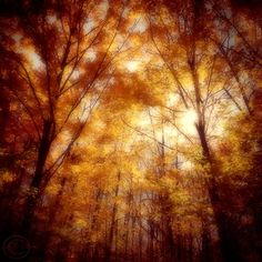 Autumn Photography, Autumn Forest, Autumn Trees, Sunlit Forest, Fall Oak and Maple Trees, Sunny Rustic Nature Tree Print, Autumn Decor