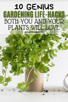 There are always some hacks that can help you save some cash and make your work easier. #gardeninghacks #gardeningtips Epsom Salt For Tomatoes, Gardening Hacks, Salts, Organic Recipes, Garden Plants, Life Hacks, Gardens, Herbs, Make It Yourself