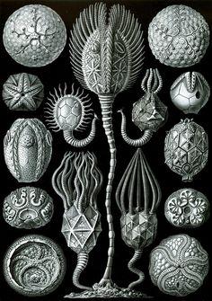 Fauna et Ars: Ernest Haeckel