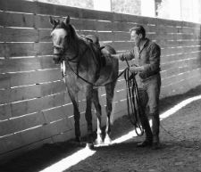 Blog- Pure Classical Dressage