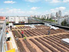 L'agriculture urbaine pourrait générer des milliards d'euros de bénéfices agricoles et environnementaux.