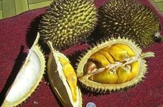 TripBucket - We want You to DREAM BIG! | Dream: Eat Durian