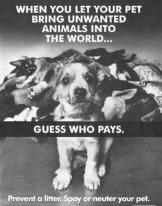Spay/Neuter... ADOPT a shelter pet.  This photo is heartbreaking but SO true.  Spay and Neuter your pets  ... I am so sick of opening up the local papers and seeing pages upon pages of puppies for sale  ... dogs are not money makers or biology teachers  ... they are part of your family to be loved and respected forever.
