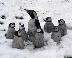 emperor penguin chicks | emperor penguin chicks