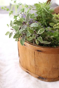 Air Kissed: Herbs and Flowers