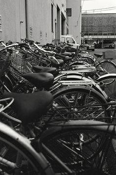自転車 (The bicycles)