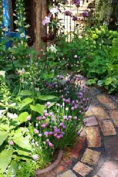 This is a really nice pathway with some bricks lending a curve around beds that are planted with beautiful edibles like the chives globed purple blooms making it multi-functional.