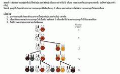 ลำดับฟีโบนักชี กับ อัตราส่วนทองคำ รหัสแห่งธรรมชาติ - Kru Rapepong