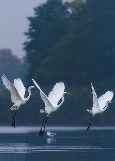 Beauty of Nature Love Birds, Beautiful Birds, Animals Beautiful, Nature Animals, Animals And Pets, Cute Animals, Photo Animaliere, Shorebirds, Tier Fotos
