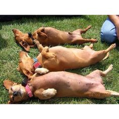 starting our tans early in Cape May pet pet friendly do we need lotion the sun feels great see u soon in cape may nj open for business with your doggies