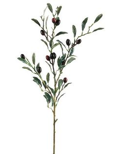 """Artificial Olive Branch Spray in Burgundy and Black<br>30"""" Tall"""