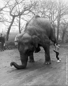 Marina Frankordi, the 4-year-old daughter of bare-back rider Frankordi, helps circus elephant Sheila to practise her balancing act. (Photo by William Vanderson/Fox Photos/Getty Images). December 1964