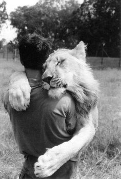 lion - young - male - affection