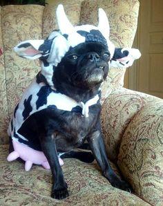 I LOVE THIS PUG!