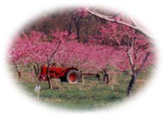 Hartland Orchard, Markham, VA - Pick Your Own Fruit: raspberries - cherries - blueberries - peaches - apples - cider - pumpkins Raspberries, Cherries, Blueberries, Pick Your Own Fruit, Bookshelf Ideas, Shenandoah Valley, Future Travel, Heartland, Day Trip