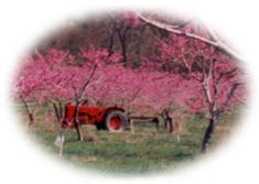 Hartland Orchard, Markham, VA - Pick Your Own Fruit: raspberries - cherries - blueberries - peaches - apples - cider - pumpkins