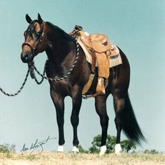 Zips Chocolate Chip, Journal Ads, Champion offsprings, AQHA sire