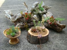 Gnarly roots, chunks of wood, hand turned  bowl all used in some of my mini succulent gardens.