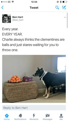 Doggo Memes Of The Goodest Boys And Girls