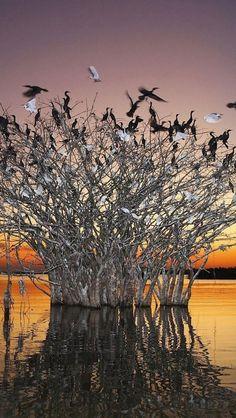 Birds   Amazing Pictures