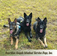 Have you ever seen more #ServiceDog cuteness packed into one photo?? These are a few of our Super Service Dogs - Apollo, Ruger & Faith.