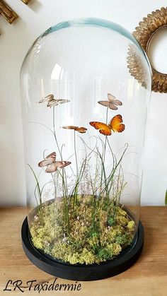 Dried Flower Arrangements, Dried Flowers, Diy Deco Rangement, Home Theater Furniture, Diy And Crafts, Paper Crafts, The Bell Jar, Flower Boxes, Glass Domes