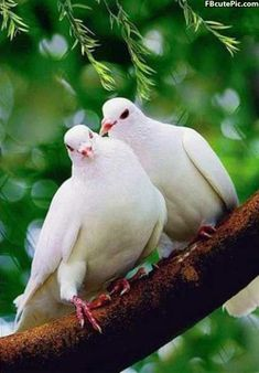 1000+ images about Birds on Pinterest   Beautiful birds ...
