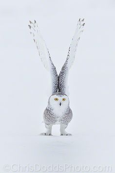 Wow. Beautiful Owl